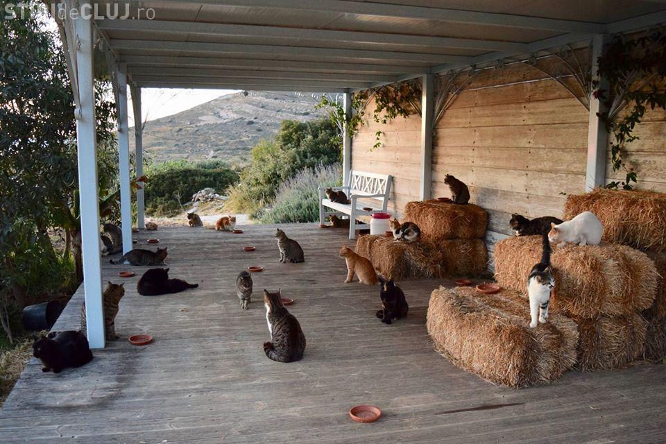Este căutat un om care să aibă grijă de 55 de pisici pe o insulă din Grecia