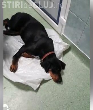 Experiență tristă la Spitalul de animale de la USAMV: Au lăsat câinele să moară - VIDEO