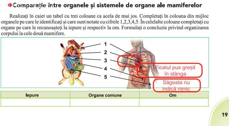 Erori și în manualul unic de biologie: inima și ficatul, poziționate greșit în corp