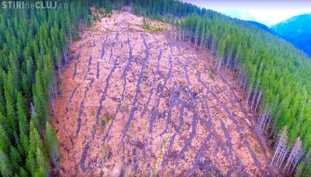 O pădure din Beliș a dispărut peste noapte! Hoții se joacă cu pădurarii: Nu-i prind pentru că nu