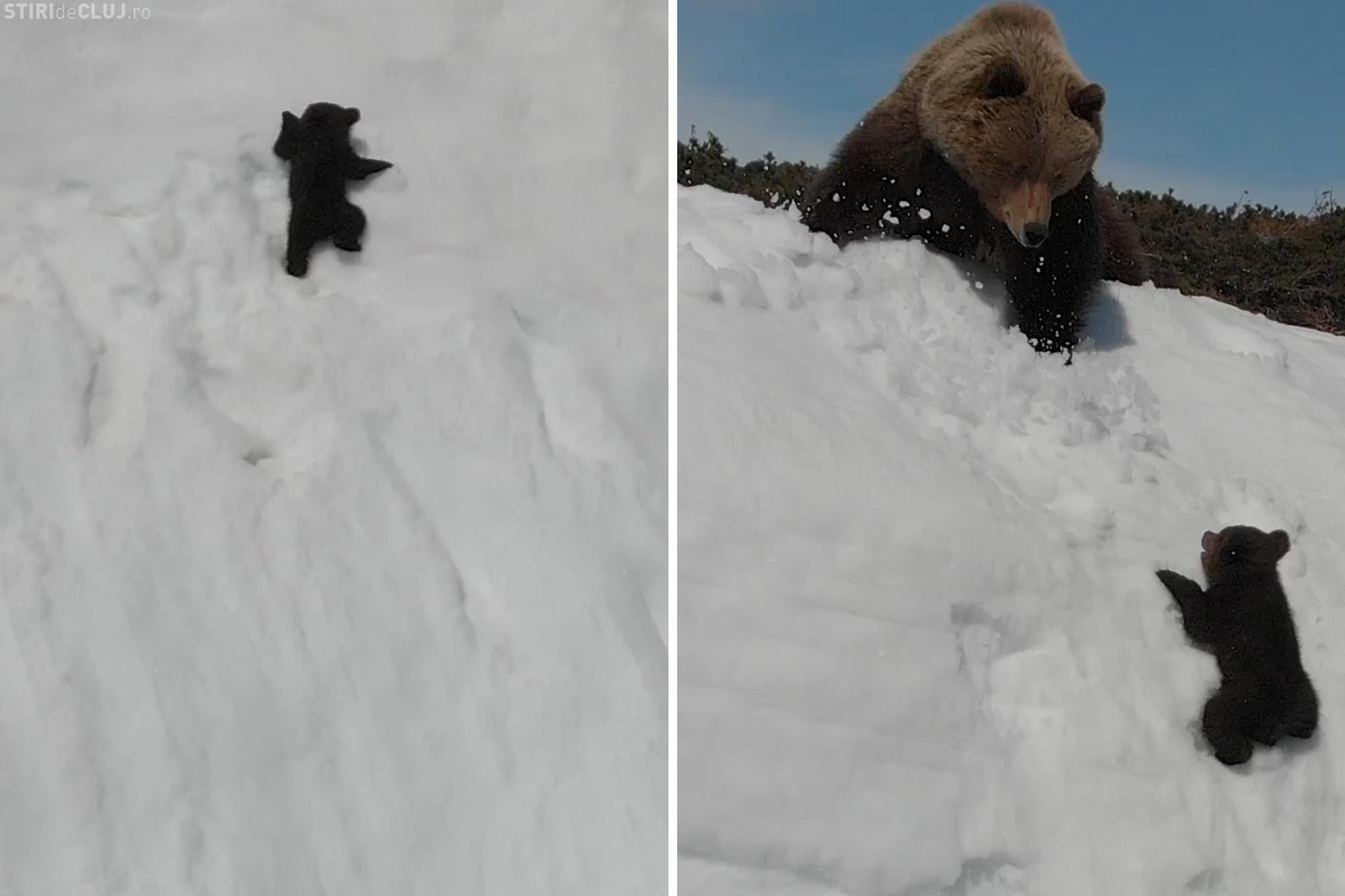 Filmarea VIRALĂ cu cei doi urși a fost criticată DUR - VIDEO