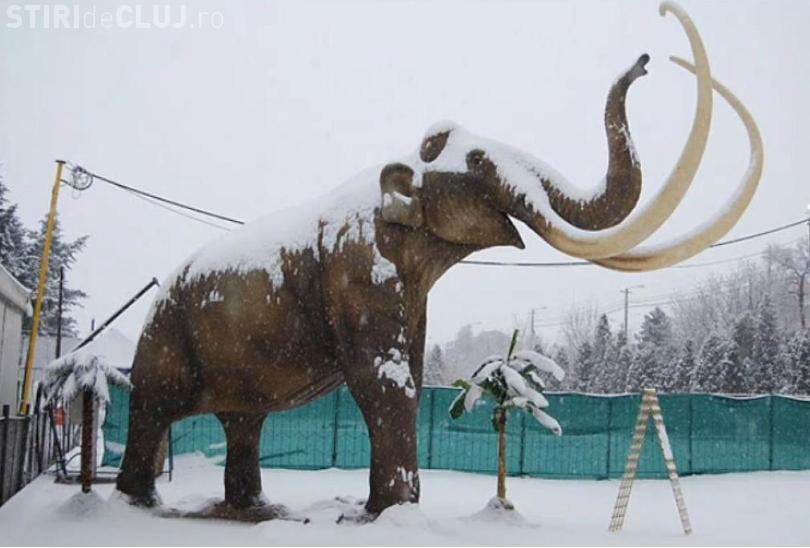 Expozitia de dinozauri s-a deschis la Expo Transilvania! Cel mai mare exponat are 23 de metri inaltime VEZI FOTO