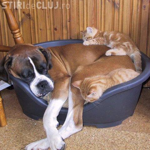 Fara acordul vecinilor, clujenii mai pot tine cel mult doua animale de companie in apartament