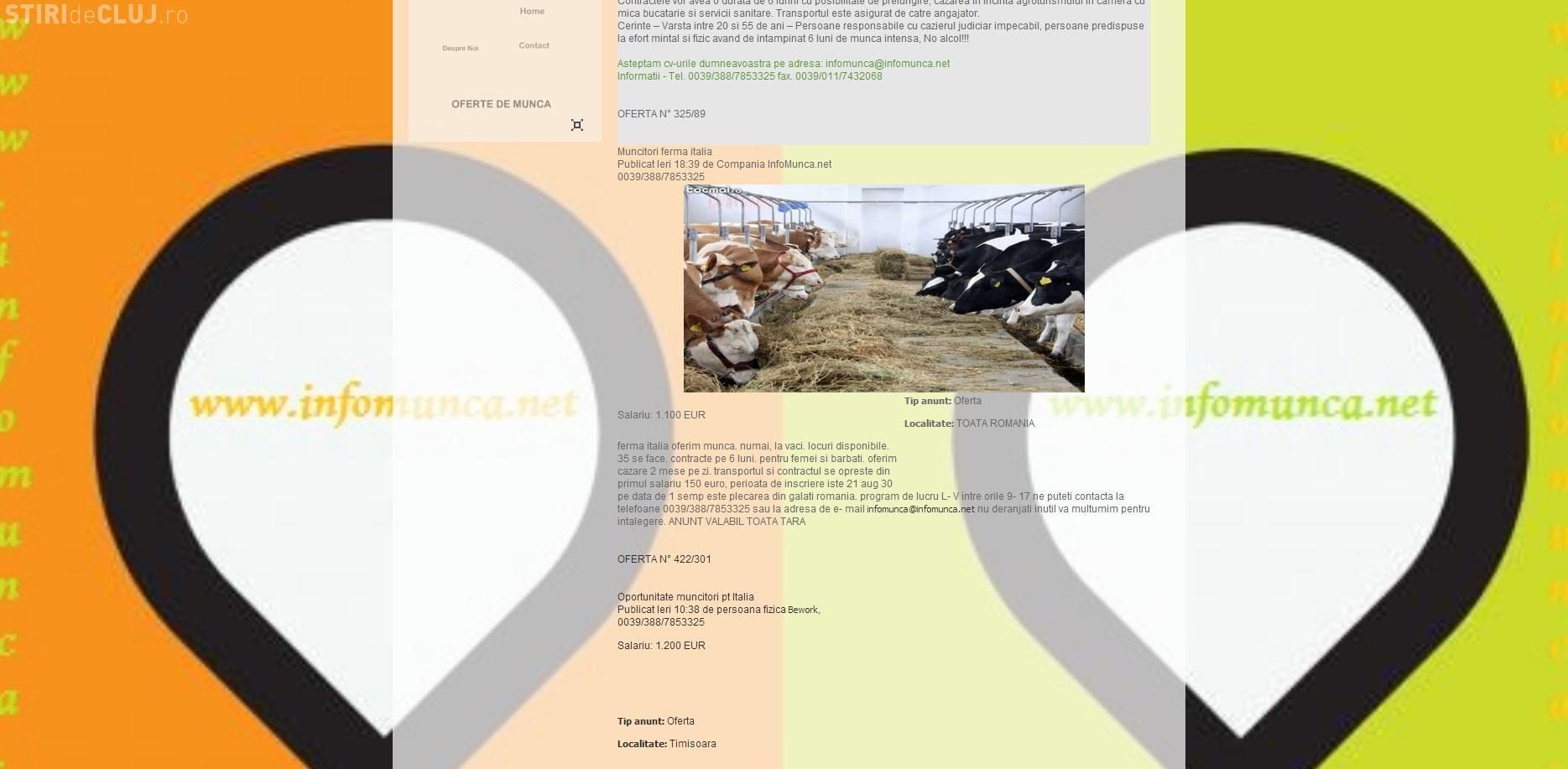 Clujeanul Titus Sfârlea dă ȚEPE cu locuri de muncă în ITALIA și pe site -ul  INFOMUNCĂ.NET