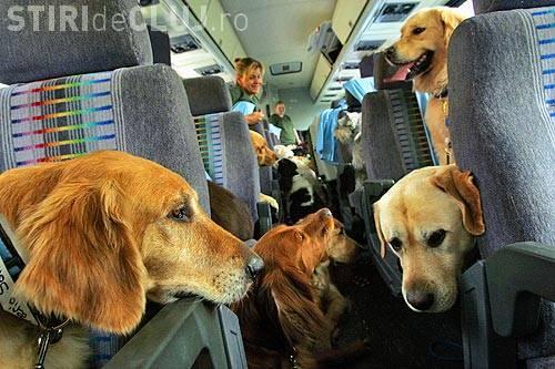"""Câine transportat de la Dej la Timişoara cu maşina primarului: """"Trebuia sa ajunga la aeroport pentru o adopţie"""""""