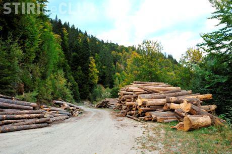 Harvard îşi vinde pădurile din România după un scandal de corupție