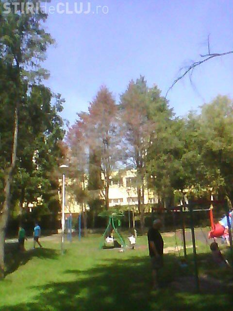 Parcul Detunata lăsat de izbeliște de municipalitate? E plin de brazi uscați FOTO