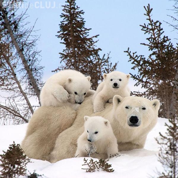 """Portretele """"de familie"""" ale animalelor care au cucerit internetul GALERIE FOTO"""