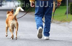 Primăria îi răspunde clujeanului executat silit pentru că și-a plimbat câinele fără lesă. Îi explică de ce a fost amendat