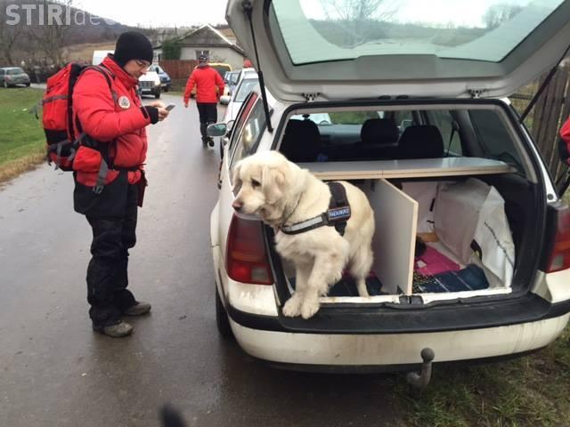 Câinii de salvare din Transilvania au nevoie de ajutorul clujenilor. Cum poți să-i ajuți să ajungă mai ușor la misiuni