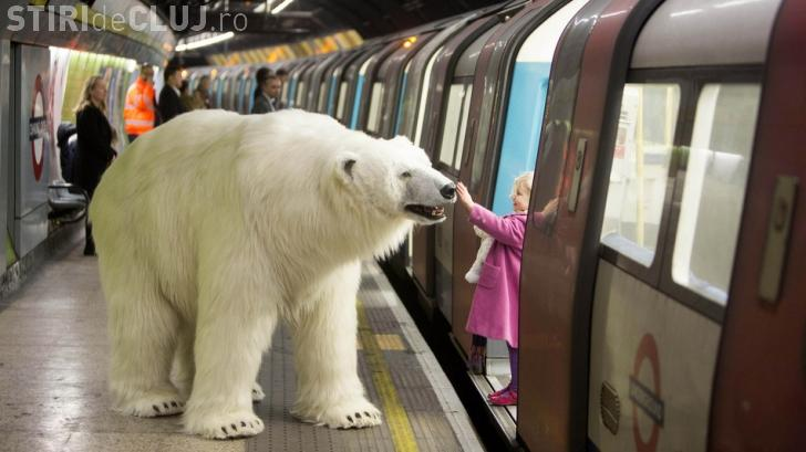 Un urs polar a apărut la metrou! - FOTO