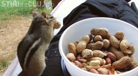 Veverițele sălbatice își fac curaj și se cațără pe el pentru a primi alune - VIDEO
