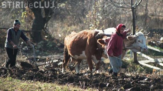Țăranii care au peste 100 de găini sau cultivă peste 2 hectare de teren trebuie să plătească IMPOZIT