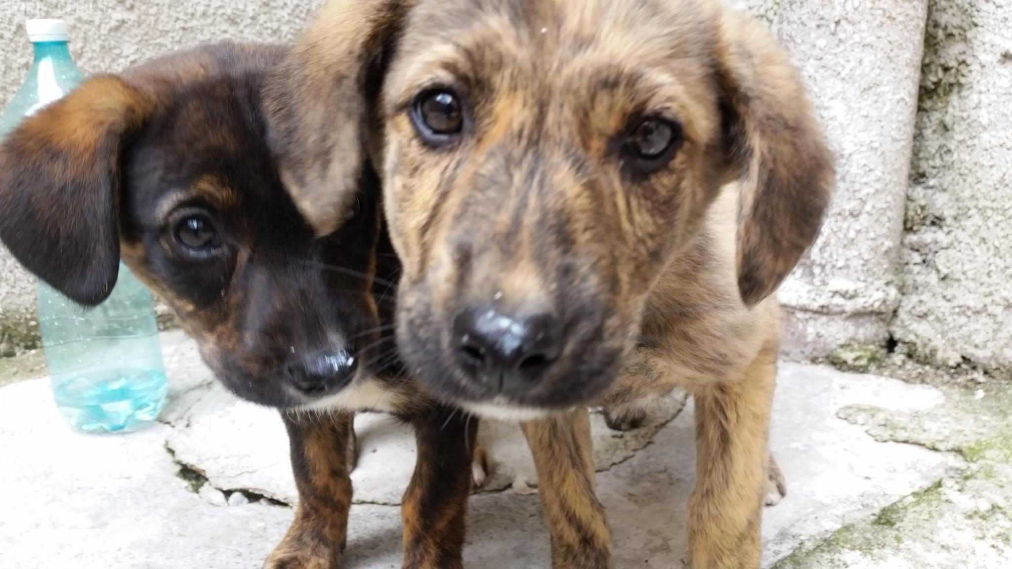 Adoptă un câine! Știri de Cluj a găsit doi pui de câine și le caută stăpân - FOTO