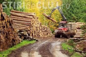 Campanie online pentru Salvarea Pădurilor din România. Semnează și tu pentru a STOPA jaful