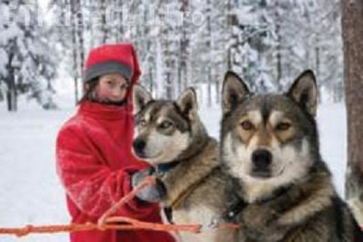 """Targul exclusiv online """"Travel Expo"""" te trimite in Laponia de Craciun!"""