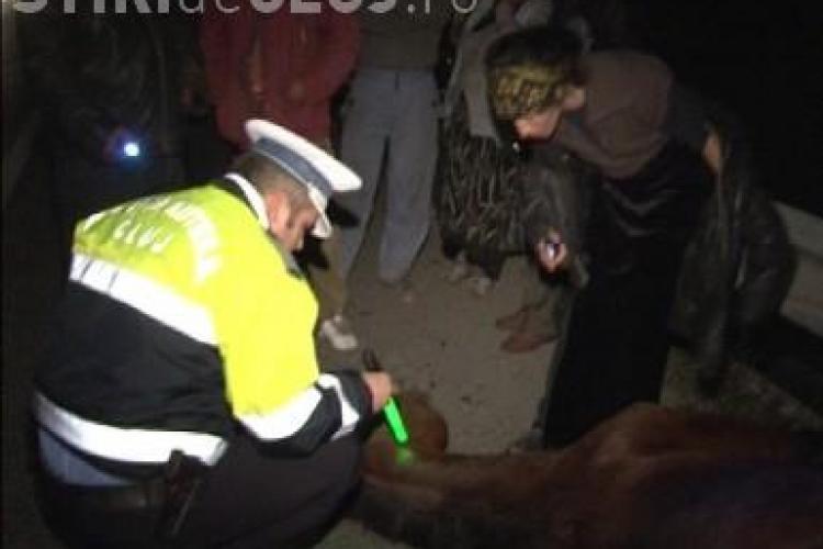 Un cal lasat liber pe centura orasului Gherla a produs un accident grav de circulatie - FOTO