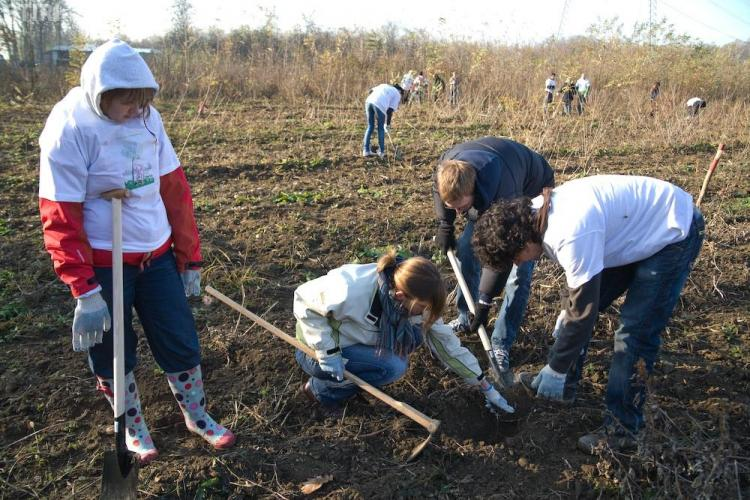 10.000 de puieti, plantati sambatala Palatca