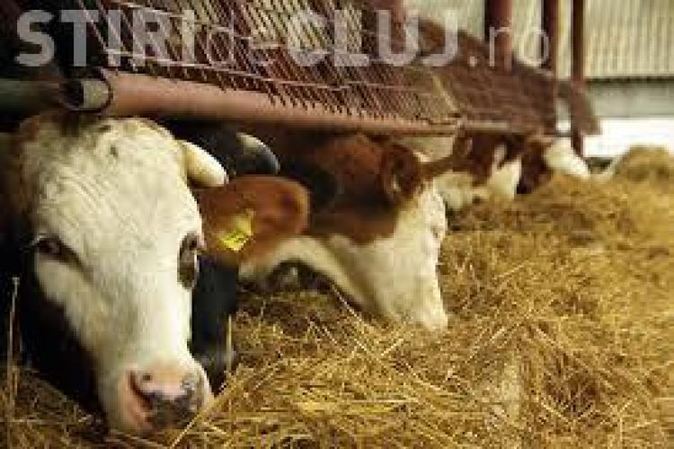 Veste bună pentru fermierii români de la UE. Primesc ajutoare până în iunie 2016