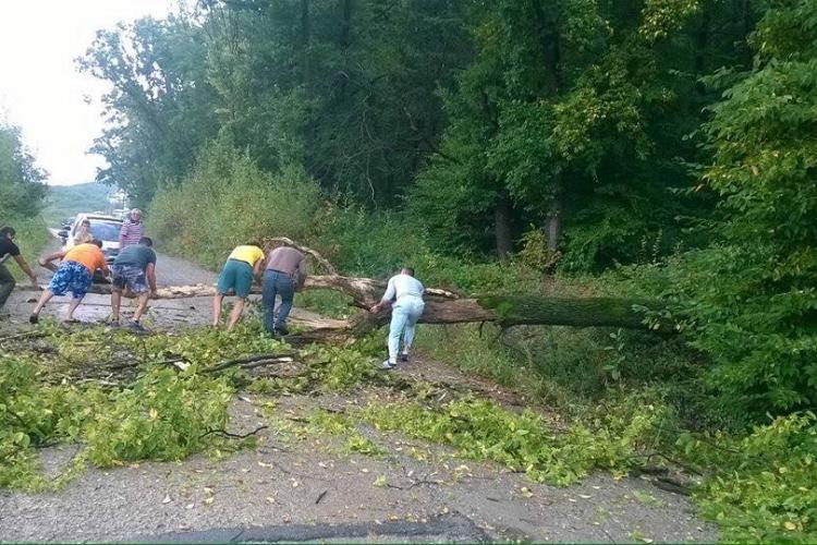 Pe strada Edgar Quinet cad copacii. Oamenii cer modernizarea drumului. Ce replică are Primăria