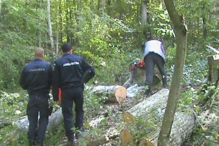 11 hoți de LEMNE reținuți la Săvădisla. Perchezitii pe banda rulanta - VIDEO