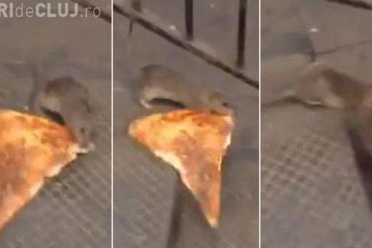 Șobolan FILMAT în timp ce căra o felie de pizza - VIDEO