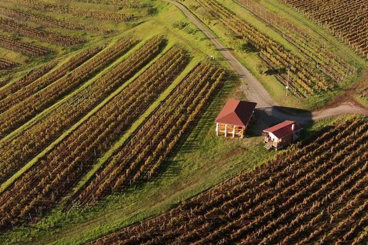 Vinul de Turda de la Crama la Salină pune Clujul pe harta viticolă a Europei - FOTO