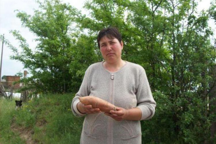 Cartoful dulce din Coreea de Sud vor fi cultivați în sudul județului Cluj, după modelul Dăbuleni