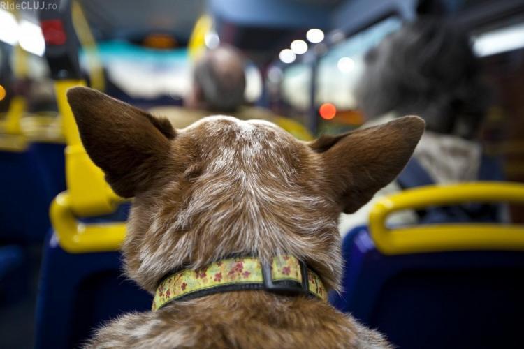 """O clujeancă a vrut să își urce câinele în autobuz cu BILET: Șoferul """"m-a dat jos ca pe o lepra"""""""