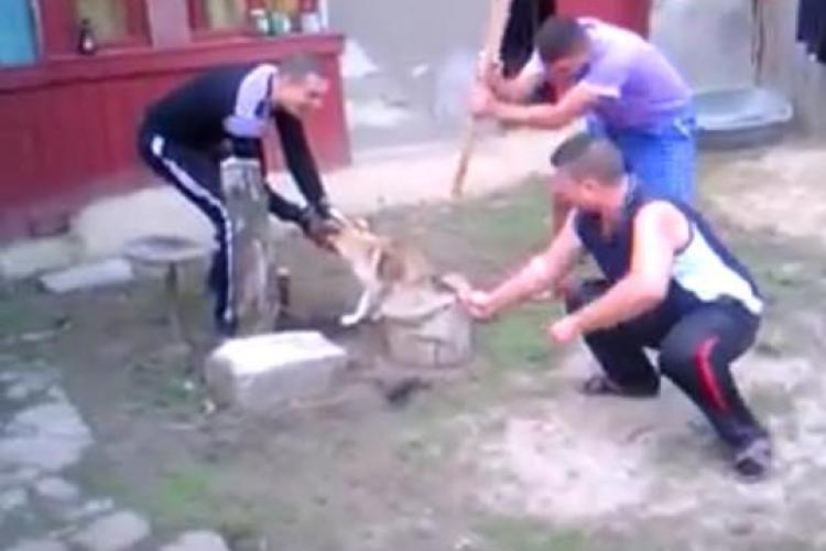 """Trei tineri din Brăila au TĂIAT coada unui câine și s-au FILMAT: """"Va rog sa acționați cumva"""" - VIDEO"""