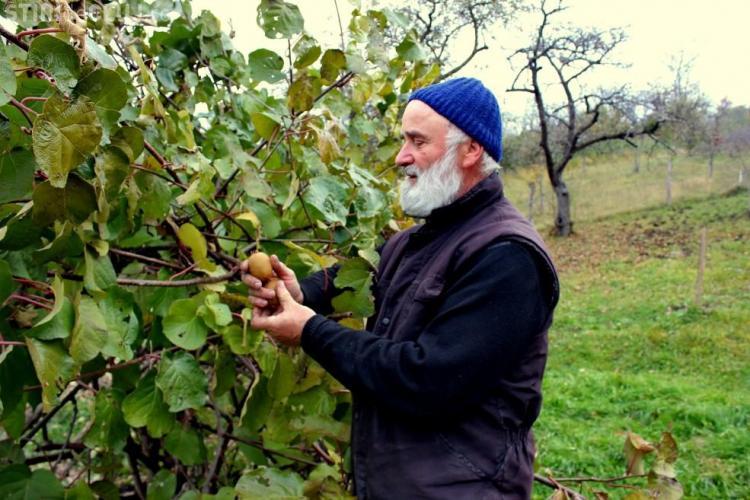 Un preot, fost informatician, cultivă Kiwi în comuna Feleacu. Recolta din acest an a fost de 45 de kg