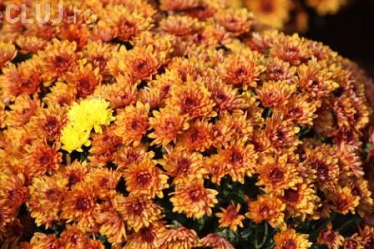 Cluj: Amplasamente pentru comercializarea florilor şi lumânărilor de 1 noiembrie