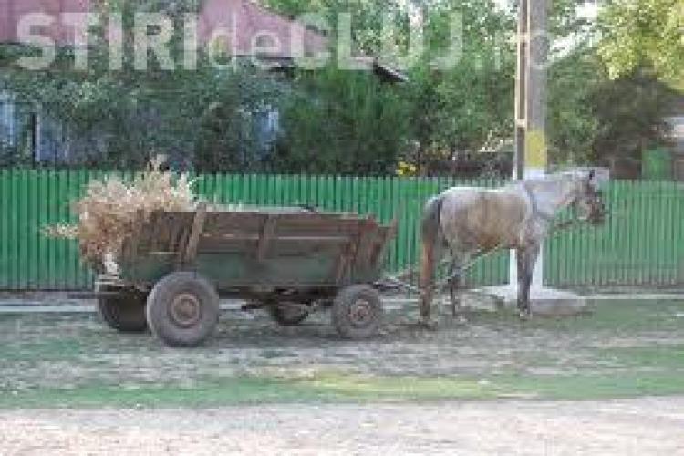 Cal spulberat e mașină la Jucu, în urma unui accident