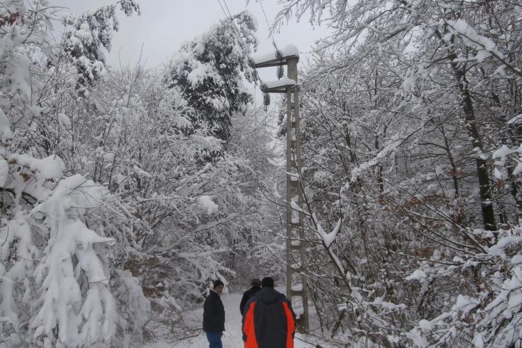 Zăpada a doborât arbori la Cluj
