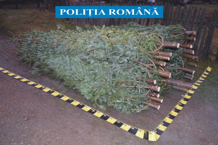 Peste 100 de brazi confiscați de poliție. Se fură pădurile tinere din Cluj - FOTO