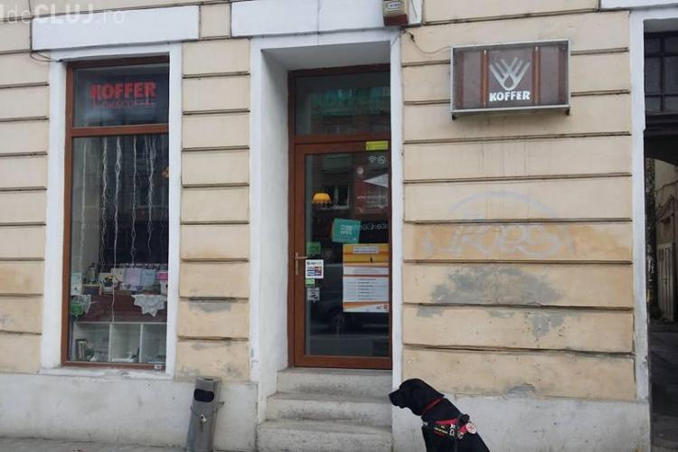 Câine terapeut, EVACUAT dintr-o cafenea din Cluj-Napoca - FOTO