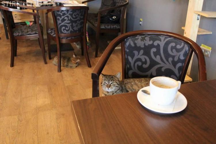 Protest la Cluj-Napoca, după ce a fost închisă cafeneaua cu pisici