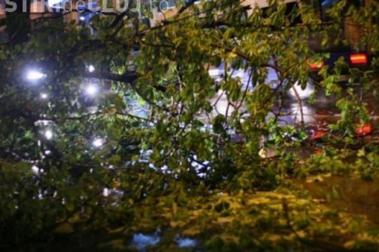 Vântul face ravagii în zona de munte a Clujului. Mai mulți copaci au căzut pe mașini și pe cablurile electrice