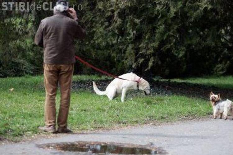 Cluj-Napoca - Amenzi pentru deținătorii de câini