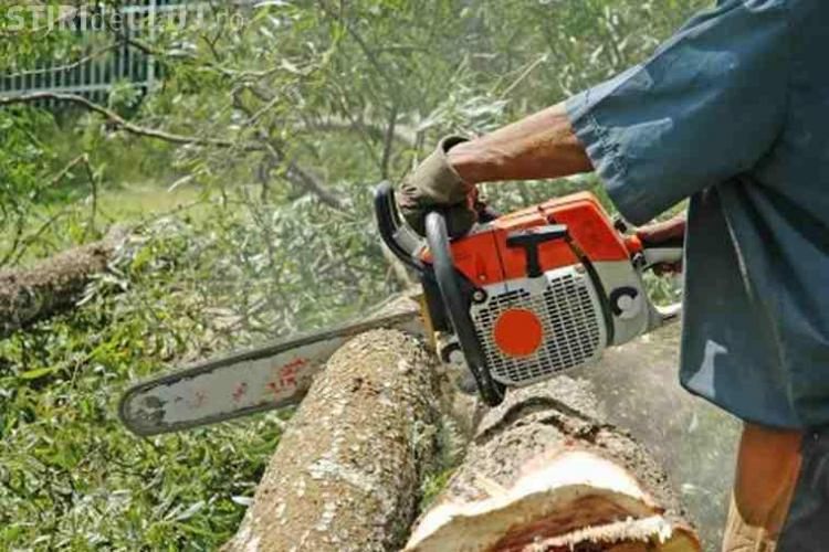 Hoți de lemne, prinși de polițiști la aproape două luni după ce au tăiat câțiva copaci