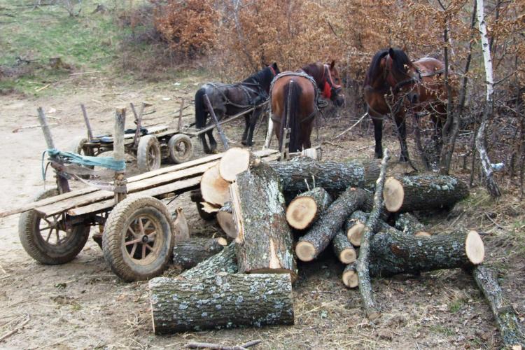 Clujeni prinși la furat de arbori. Au ajuns în spatele gratiilor