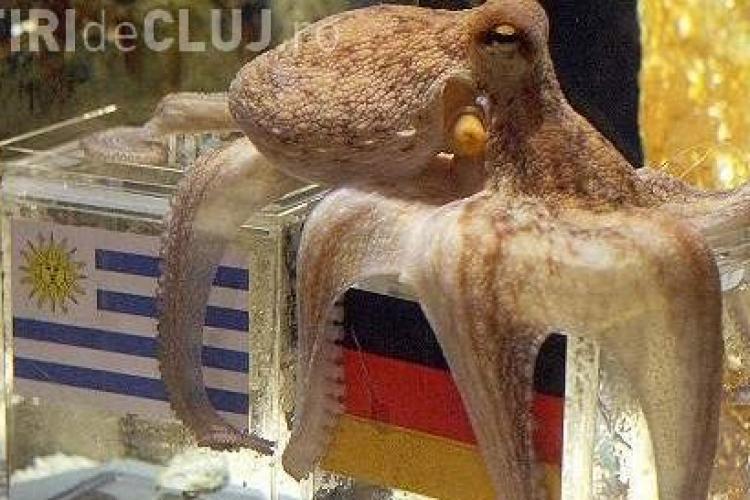 Caracatita Paul, celebra in timpul Campionatului Mondial de Fotbal, a murit