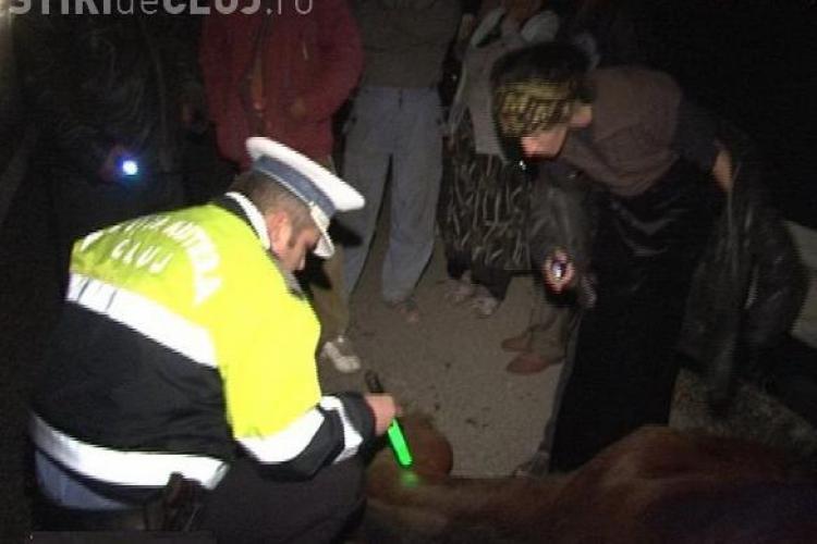 Accident cu doua victime in Savadisla! Un autoturism a lovit un cal lasat nesupravegheat, care a intrat pe drum