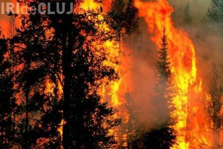 Incendiu de padure in zona Rachitele - Margau! Alarma a fost data de un grup de turisti, dar incendiul nu a fost localizat (UPDATE)