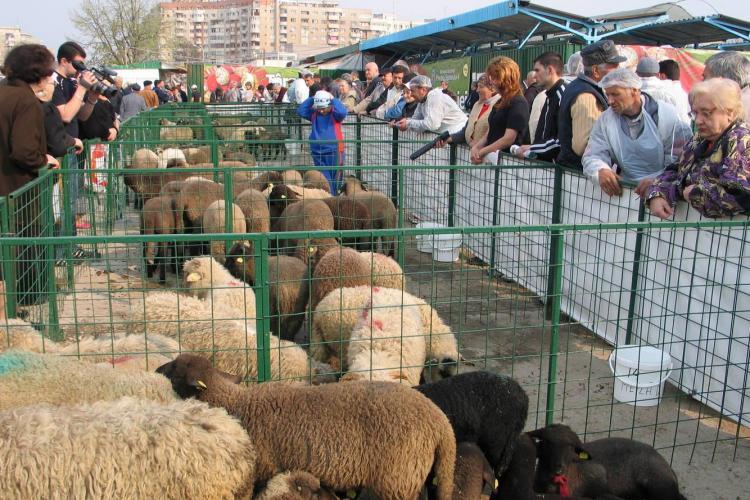 Punct autorizat pentru sacrificarea mieilor la Agro Transilvania