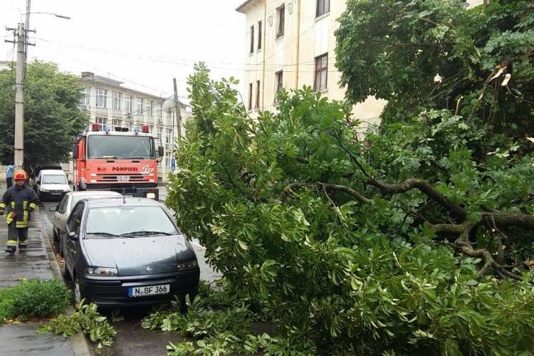 Stradă blocată la Cluj de un castan căzut. Pompierii au intervenit rapid FOTO
