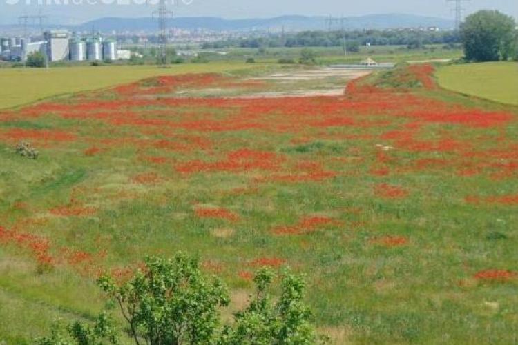 Pe un sector din autostrada Turda - Sebeș cresc MACII! Cum s-a ajuns aici - FOTO
