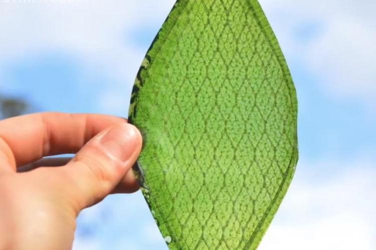 A fost creată prima frunză biologică sintetică. Ar putea permite oamenilor să colonizeze spaţiul - VIDEO