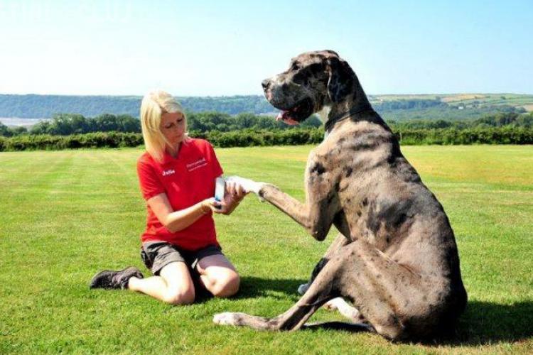 Cum arată cel mai mare câine din lume