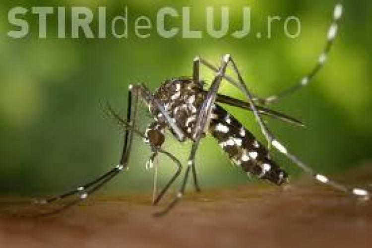 Un clujean a fost infectat cu virusul Zika! Ministerul Sănătății confirmă informațiile